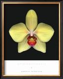 Phalaenoposis Art by Harold Feinstein