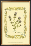 Thyme Print by Wendy Russell