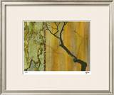 Golden Echoes I Limited Edition Framed Print by M.J. Lew