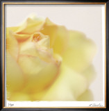 Pastel Study 11 Limited Edition Framed Print by Claude Peschel Dutombe
