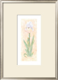 Iris Soliloquy II Prints by Nancy Kaestner