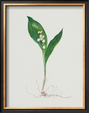 Lily of the Valley Poster by Moritz Michael Daffinger