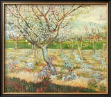 Olive Trees Art by Vincent van Gogh