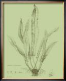 Fresh Ferns IV Art by Samuel Curtis