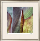 Banana Leaves IV Limited Edition Framed Print by Joy Doherty