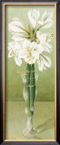 Amaryllis Posters by Galley 