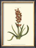 Antique Hyacinth VII Prints by Christoph Jacob Trew