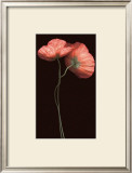 Poppy Duet Prints by S. G. Rose