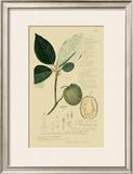 Tropical Fruits II Art by A. Descubes