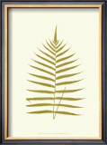 Lowes Fern IV Prints by Edward Lowe