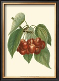Red Cherries Prints by John Wright