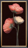 Poppy Trio Posters by S. G. Rose