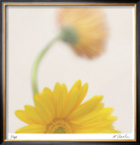 Vivid Study 5 Limited Edition Framed Print by Claude Peschel Dutombe