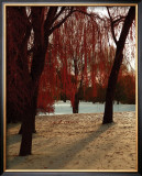 Autumn Snow I Prints by Alicia Soave
