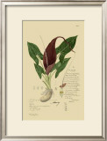 Aroid Plant IV Prints by A. Descubes