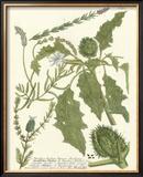Weinmann Greenery II Prints by Johann Wilhelm Weinmann