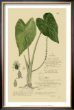 Aroid Plant I Posters by A. Descubes