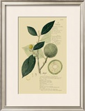Tropical Fruits I Posters by A. Descubes