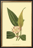 Tropical Ambrosia I Prints by Sydenham Teast Edwards