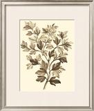 Sepia Munting Foliage I Prints by Abraham Munting