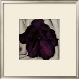 Purple Petunia, 1925 Print by Georgia O'Keeffe