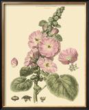 Blushing Pink Florals V Prints by  John Miller (Johann Sebastien Mueller)