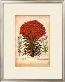 L'Herbier VII Poster by Besler Basilius