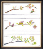 Spring Branches Posters by Robbin Gourley
