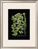 Weinmann Botanical on Black VI Posters by Johann Wilhelm Weinmann