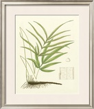 Eaton Ferns I Prints by Daniel C. Eaton
