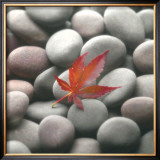 Leaf on Stone Prints by Glen &amp; Gayle Wans