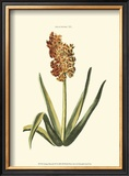 Antique Hyacinth XV Poster by Christoph Jacob Trew