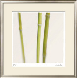 Bamboo Study 9 Limited Edition Framed Print by Claude Peschel Dutombe