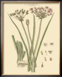Blushing Pink Florals VIII Prints by  John Miller (Johann Sebastien Mueller)