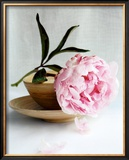 Peony Poster by Amelie Vuillon