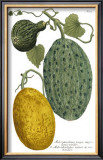 Antique Melons II Poster by Weimann