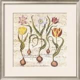 Travertine Botanicals I Posters by Besler Basilius