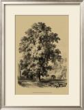 The Elm Tree Art
