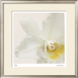 Pastel Study 3 Limited Edition Framed Print by Claude Peschel Dutombe