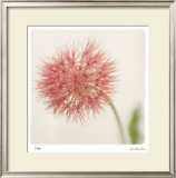 Pastel Study 7 Limited Edition Framed Print by Claude Peschel Dutombe