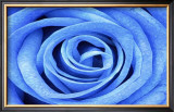 Blue Rose Framed Giclee Print by Stephen Lebovits