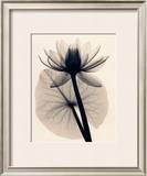 Tropical Water Lily Poster by Judith Mcmillan
