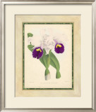 Fitch Orchid I Prints by J. Nugent Fitch