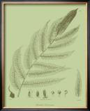 Fresh Ferns III Prints by Samuel Curtis
