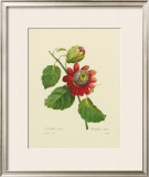 Passion Flower Framed Giclee Print by Pierre-Joseph Redouté
