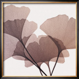 Ginkgo Leaves I Prints by Steven N. Meyers
