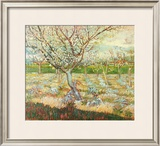 Olive Trees Art by Vincent van Gogh