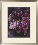 Heuchera After Rain Prints by Sue Warner