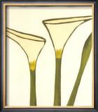 Arum, c.2003 Prints by Nicolas Le Beuan Bénic