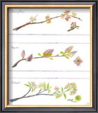 Spring Branches Poster by Robbin Gourley